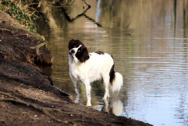 Hond in het water